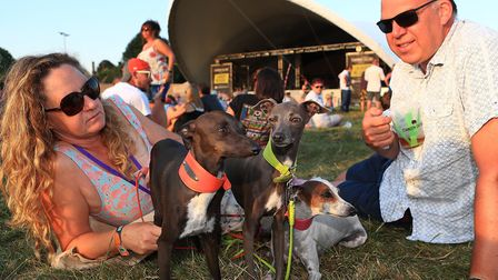 Even the doggies enjoy the music at Standon Calling Festival 2018. Picture: KEVIN RICHARDS