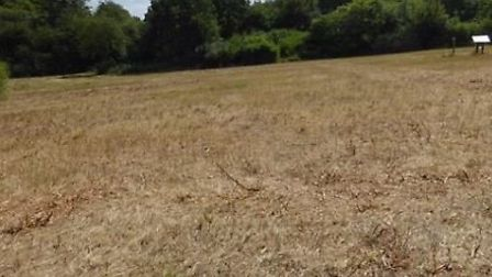 Shackledell Grassland, once a haven for wildlife, has been destroyed by a council worker. Picture: C
