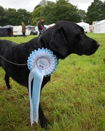 The dog show competition, which has been a big hit in previous years, is returning. Picture: Courtes