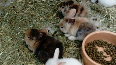 Owner Heike Joachimi was devestated when all of her rescue bunnies past away. Picture: Heike Joachi
