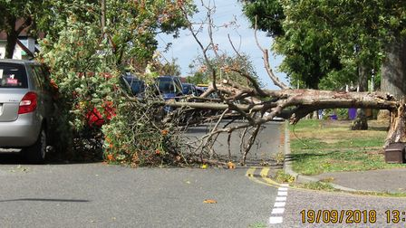 A tree has fallen down in Ridge Avenue, Letchworth, causing damage to a car. Picture: Paul Ross