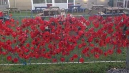 A display of poppies outside Longmeadow Primary School, created by the pupils. Picture courtesy of R