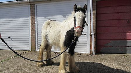 Colin was in a poor condition when he first arrived at Hall Farm in Norfolk after being rescued by W
