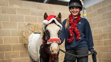 Colin has now been rehabilitated after being abandoned in Potton. Picture: Basil Hayes, World Horse