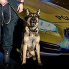 Oz and his handler's hard work and dedication was recognised at Hertfordshire Constabulary's annual