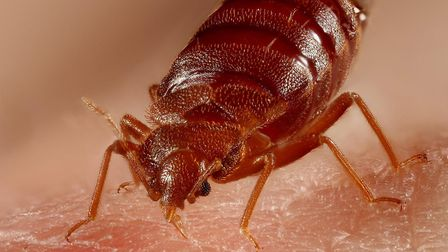 The council are asking residents to leave their flats for bedbug treatments to be done