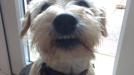 Ernie's family have been left devastated since he went missing. Picture: Joanne Mitchell