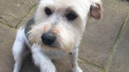 Ernie has been missing since Saturday morning. Picture: Joanne Mitchell