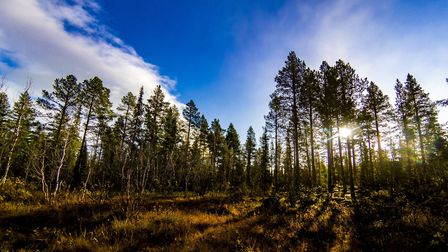 Tom Young's arctic trek through Lapland. Picture: Tom Young