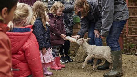 Standalone Farm in Letchworth has opened its doors in time for February half term. Picture: Letchwor