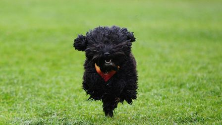 The therapy dog at York Road Nursery takes part in a charity run to raise money for Autism. Picture: