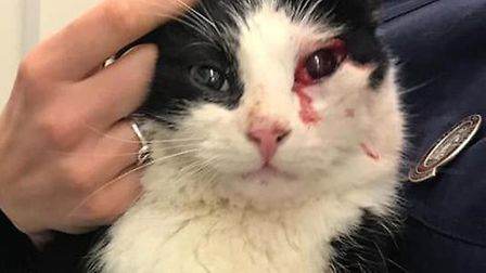 Can you help find the owners of 'McClane' who was found in Elsenham after being hit by a car? Pictur