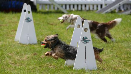 A demonstration at DogFest 2019 at Knebworth House. Picture: DANNY LOO