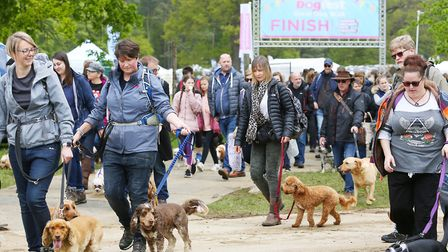 Visitors take part in the Great Dog Walk at DogFest 2019 in the grounds of Knebworth House. Picture: