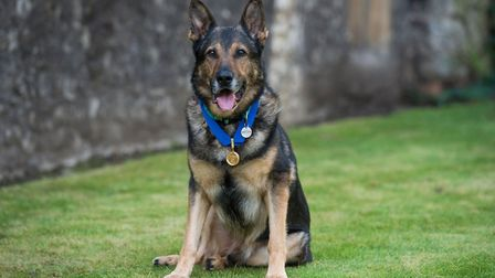 Police Dog Finn proudly shows off his PDSA Gold Medal. Picture: PDSA