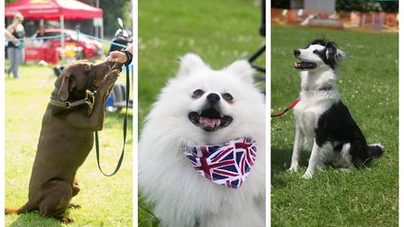 Last year's Doggie Day brought out smiles and sunshine. Picture: Stevenage Dog Watch