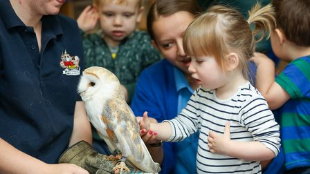 A petting zoo at Wonderland Nursery as part of their 25th Birthday celebrations. Picture: DANNY LOO