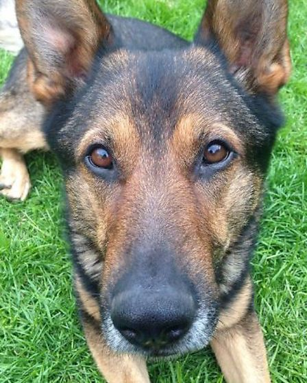Finn's Law being passed meant it is now an offence to cause unnecessary suffering to a service anima
