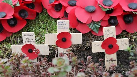 Remembrance services will be happening across North Herts and Stevenage this weekend. Picture: Danny