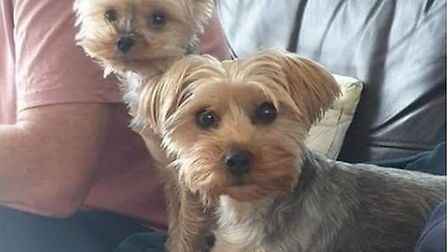The dogs disappeared from a property in Hinxton last week. Photo: Facebook.