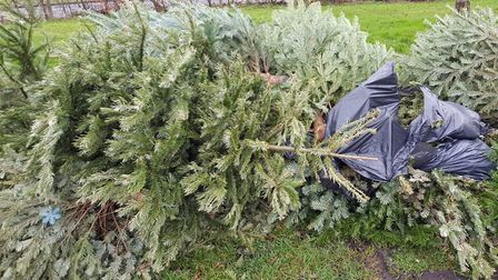 Stevenage Borough Council have reminded residents that Christmas tree disposal is included in their