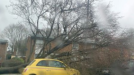 A fallen tree in Stevenage's Bedwell Crescent struck a number of parked cars. Picture: Steve Spencer