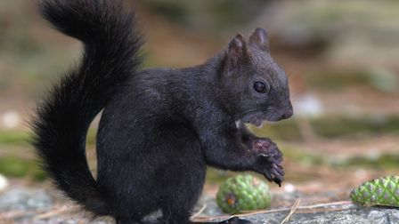 January 21 is Squirrel Appreciation Day. Picture: Archant
