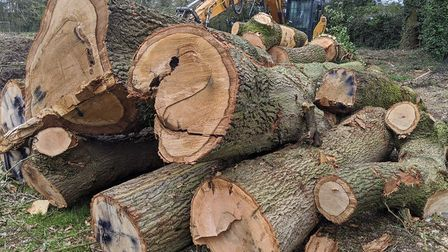 Some of the felled trees are believed to be more than 100 years old. Picture: Tom Wren