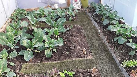 Diane Ketcher of Transition Town Letchworth has shared her love for all things GIY. Picture: Green C