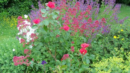In her latest column, Diane Ketcher extols the virtues of bee life our gardens. Picture: TTL