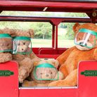 Teddy bears on the train with safety visors. Picture: Audley End Miniature Railway.