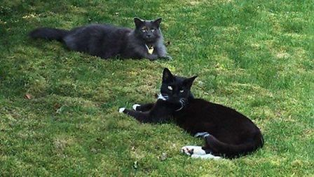 It is believed Leo and Ziggy both died after being shot with an air rifle.