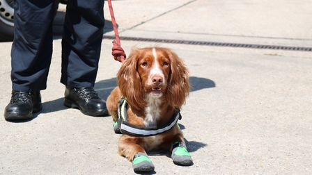 Fizz, Essex's first Fire Investigation dog. Picture: Essex County Fire and Rescue Service