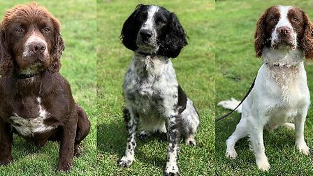 New police dogs Dexter, Oreo and Alfie join Essex Police Dog Unit. Picture: Essex Police