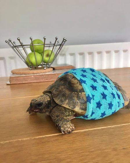 Charlie the tortoise suffered a broken shell after it is believed he was hit by a car, but is expect