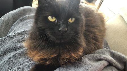 Bonita the cat is under the care of Kimpton's Blue Cross while new owners are found, after her elder