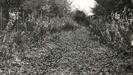 The location where Rita's body was found. Picture: Herts Police.