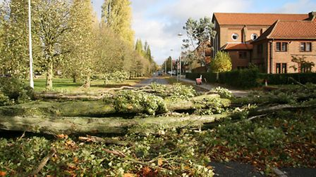Trees downed on Parkway