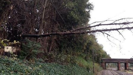 Blown down trees disrupting train services