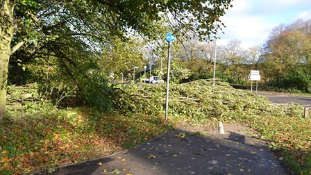 Trees blown over in Hatfield