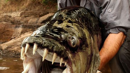 Jeremy Wade with his prized goliath tiger fish in the Congo (Picture: Daniel Huertas and Icon Films)