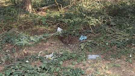 The woodland where Paul Hamish Holland's body was found