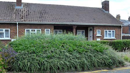 Overgrown hedges and grass at Roddons home of Jean Morgan in St Paul's Close, Wisbech. Picture: Stev