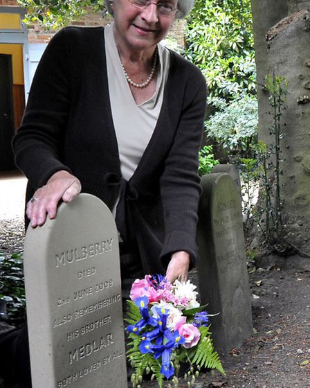 Unveiling of a new headstone in the cat cemetery at Peckover House. It was the first one to be insta