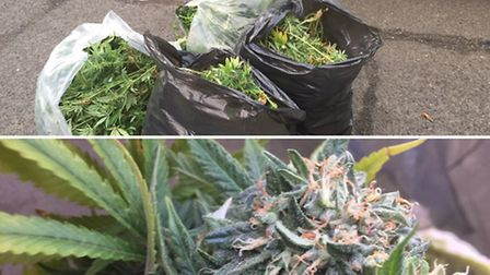 Woman arrested and cannabis farm uncovered in Wisbech area
