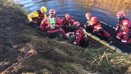 Sheep rescued after falling into river on March Road, Guyhirn
