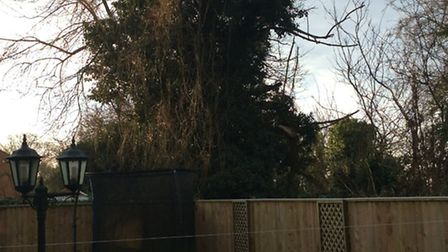Residents in Elm are calling for this tree to be cut down as they believe it could fall on their hom