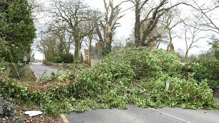 A tree which fell on the road in Church Road, Leverington on Thursday (23). PHOTO Ian Carter.