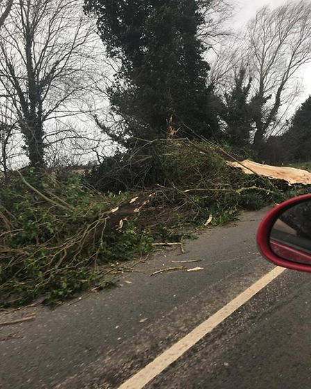 A tree that fell on a road about a mile from Stretham on Thursday (23). PHOTO: Daisy Brownlow.