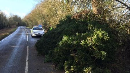A tree was blown down on the B1101 March Road, Friday Bridge on Thursday (23). PHOTO: Policing Wisbe